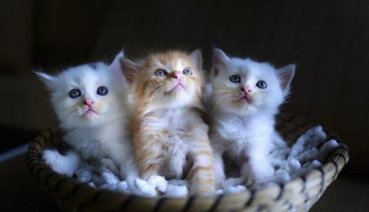 子猫を拾ったけどどうしたらいい?里親探しの4つの方法を解説