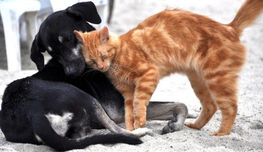 臭いの習性を利用して猫と仲良くなる方法