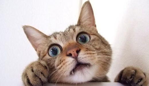猫が食べたらキケンなもので私が嫌いなものランキング