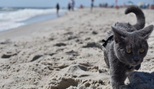猫のトイレの砂かけは人間でいう水洗の役割?なぜ砂をかけるのか