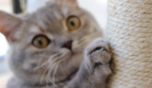 柱に猫の爪が刺さってる!?大丈夫、脱皮です。猫の爪と爪とぎについて