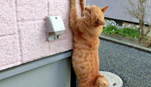 猫は何を使って爪をとぐのが好き?とりあえずアレじゃなくて良かった