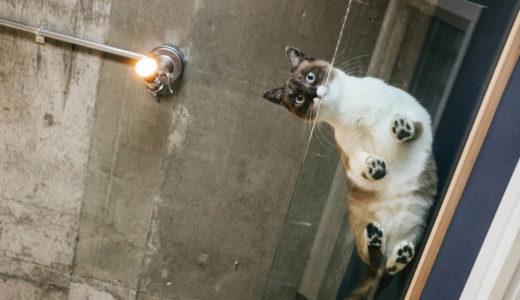 猫の肉球は何の為にあるの?私の幸せ以外に