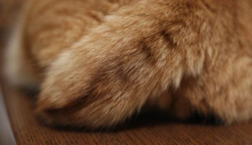 猫のしっぽが短いのは問題ないの?しっぽの役割とは