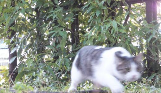 猫はトイレの時に何故ダッシュするの?かなりの勢いだけど速度は何キロ出ているんだろう