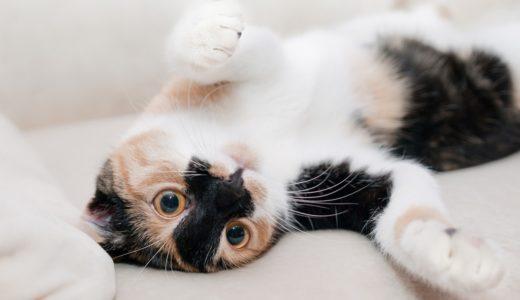 猫のゴロゴロに癒されるのには理由があった!ずっと聞いていたい人にはオススメのサイトも