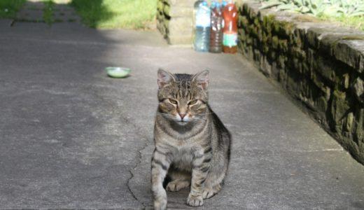 水を入れたペットボトルを置くのは猫よけとして効果があるのか?むしろ危険なことも