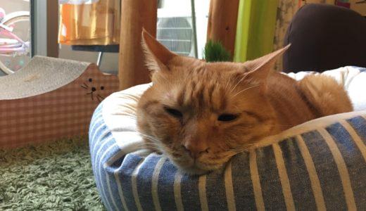 【初めて猫を飼う方へ】猫にとっていい環境づくりの4つのポイント