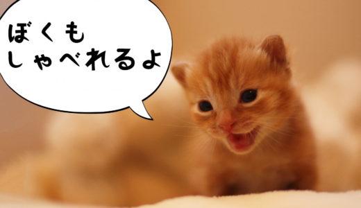 【猫がしゃべる!】石田ゆり子さんのインスタでお馴染みハニオとタビが喋るアプリを使ってみた。使い方も解説