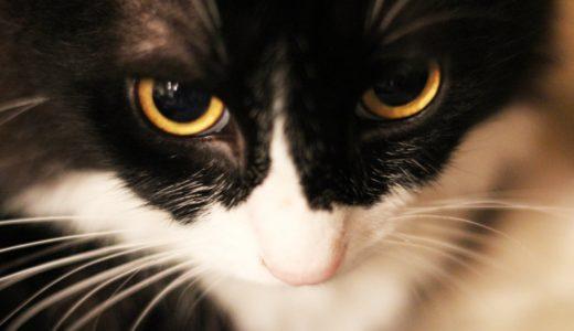 暗闇でなぜ猫の目は光る?そして目が光る猫のランプも気になる