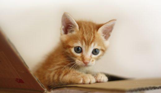猫が捨てられていたら思い切って一時保護をしてみよう!