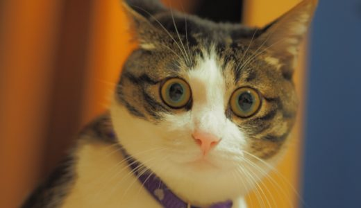 え?そんなことまで聞かれるの?猫の里親になる条件がきびしすぎると感じたら読む記事