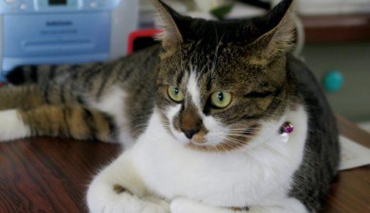 猫の寿命ってどのくらい?環境で違いってあるの?