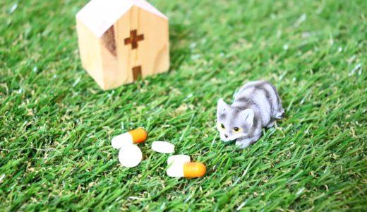 長生きしてほしい犬猫、加入年齢に合わせたペット保険の選び方、考え方