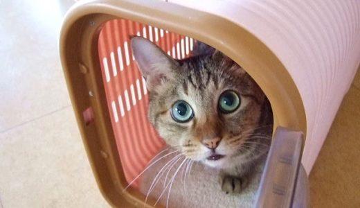 グラっときたらまずどうする?地震から猫を守る方法