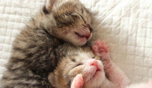 【日本の俳優編】保護猫や雑種を飼っている猫大好き有名人を集めてみた