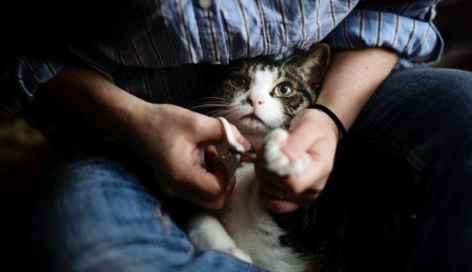 上手に切れない人必見!猫の爪をうまく切る方法とは?
