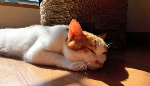 猫は暑さに強い?コスパを考えた猫の真夏の暑さ対策