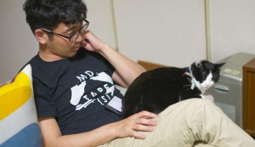 【猫の里親になりたい】一人暮らし、特に男性が猫の里親になるためにはどうしたら良い?