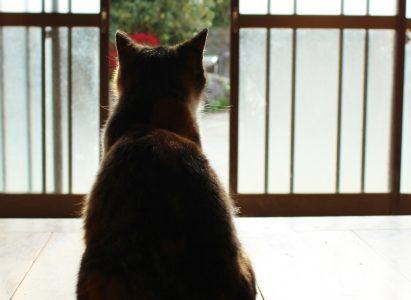猫が脱走したら最初が肝心!脱走猫の見つけ方
