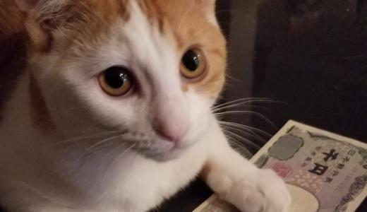 【猫の里親になりたい】猫を譲ってもらう時にかかる費用ってどのくらい?