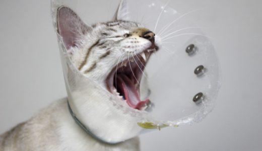 これで成功!猫にうまく薬を飲ませる方法