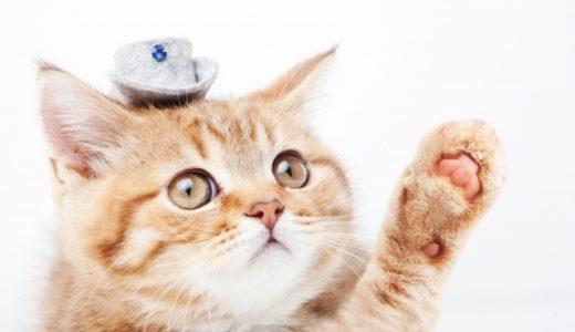 あたりまえなことですが、猫ってなんでこんなに可愛いの?